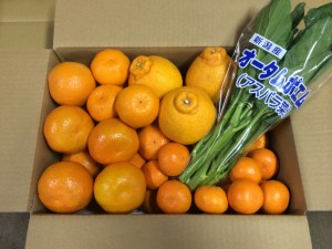 2月柑橘詰め合わせ